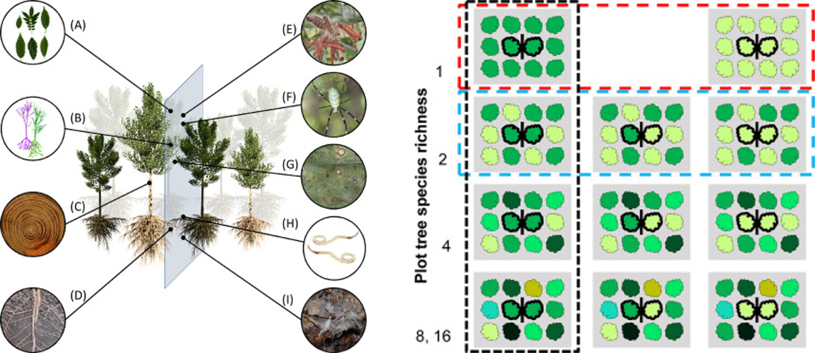 The significance of tree-tree interactions for forest ecosystem functioning