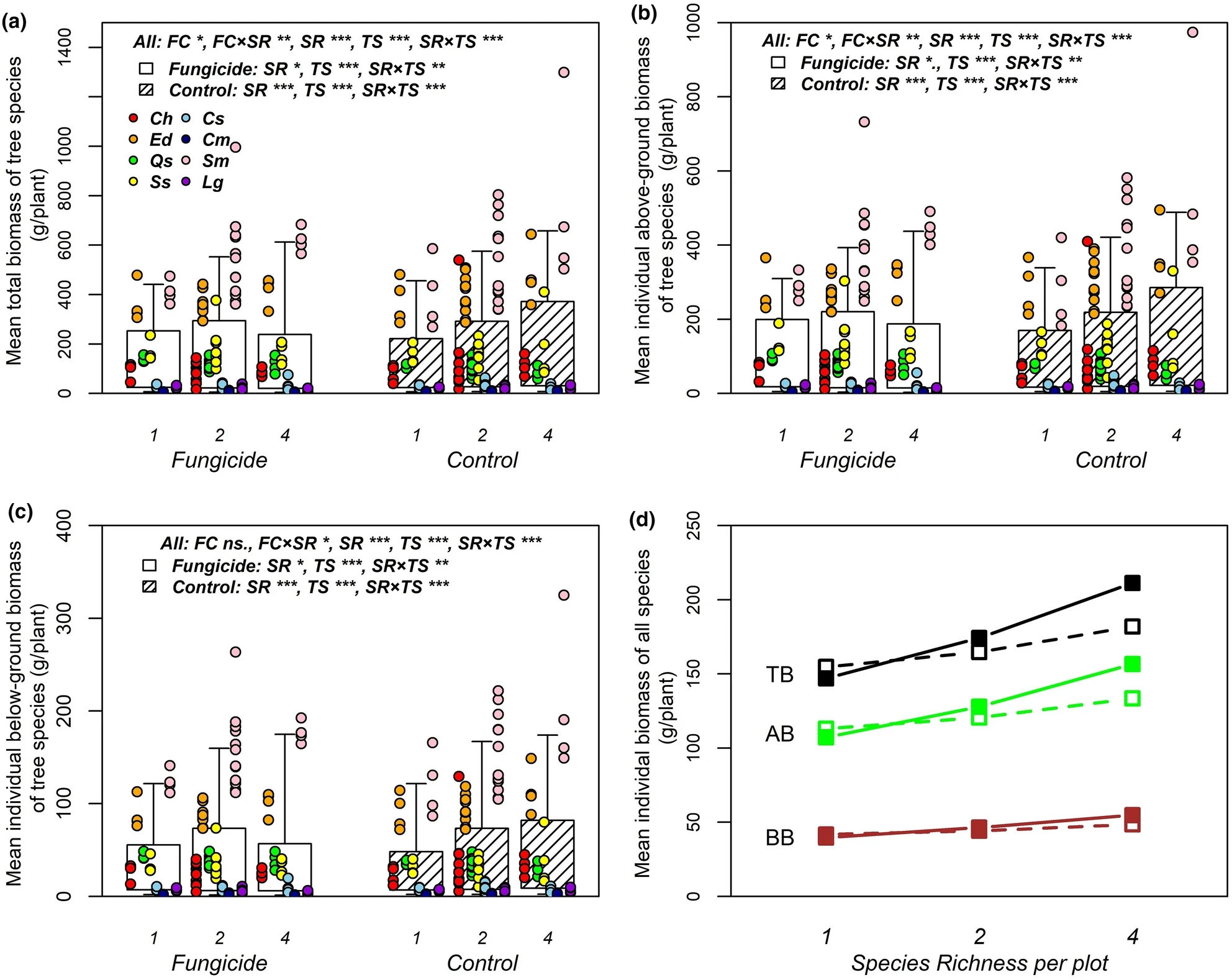 Soil fungi promote biodiversity–productivity relationships in experimental communities of young trees