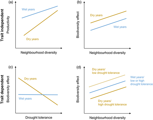 Neighbourhood diversity mitigates drought impacts on tree growth