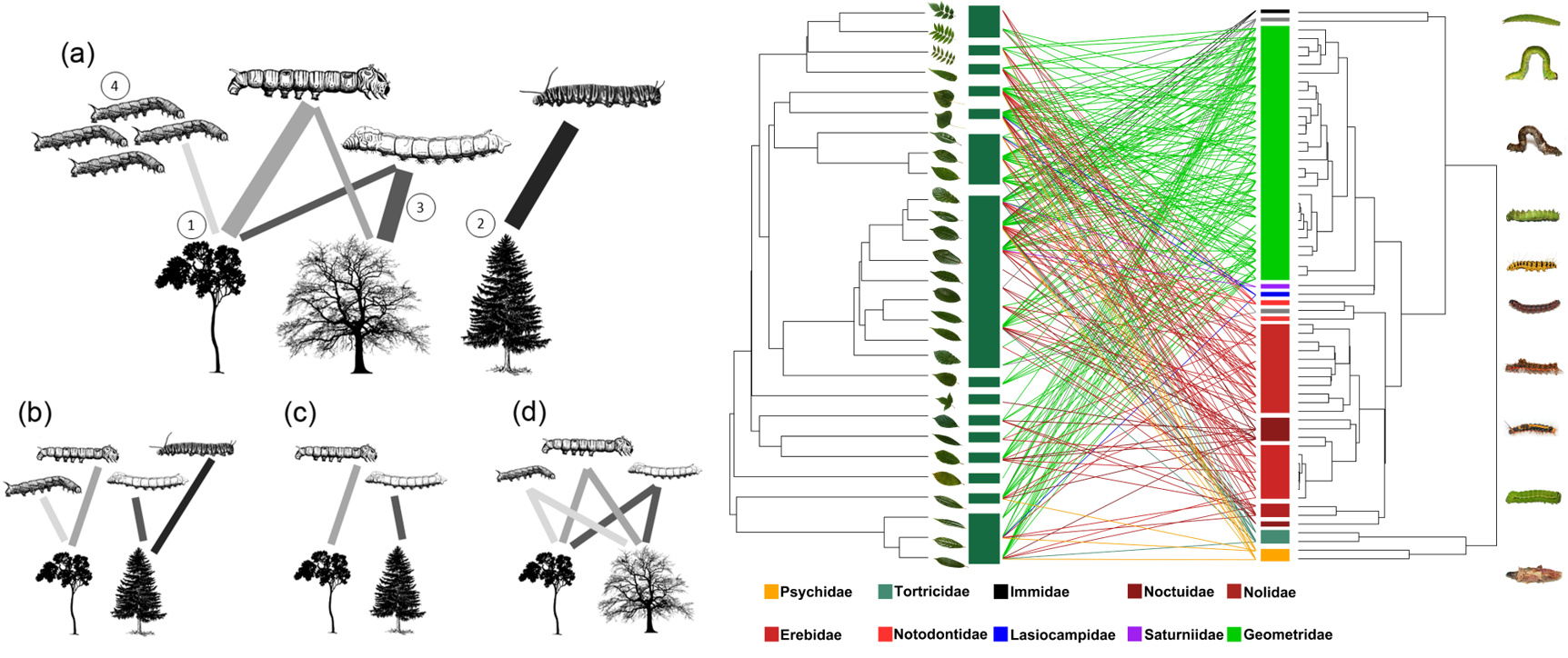 Host functional and phylogenetic composition rather than host diversity structure plant-herbivore networks